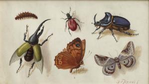 Tableau mit Insekten