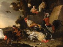 Hahnenkampf